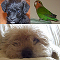 my dog�s and my bird