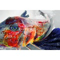 digitalartclub abstract fish fun