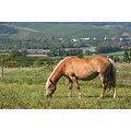 horse landscape moselle luxembourg