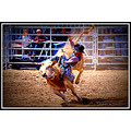 bullriding pankey wildspirit action danger animal pbr rodeo