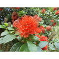 flower flowers flores nature shrubs arbustos brazil nature