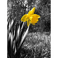 spring yellow flower plant nature life hope