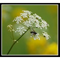 insect fly flower insect insectfriday nature somerset somersetdreams