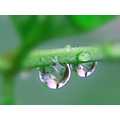 nature leaves water