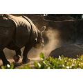 animal wildlife Rhino