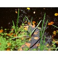 netherlands groeneveld leaf water autumn nethx groex waten leafx autux
