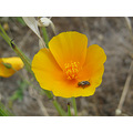 bug flower amarillo flor bicho