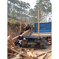 local forest work in Guangdong, China