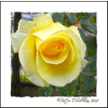 yellow rose park tralee kerry Ireland Peter OSullivan