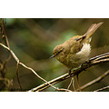 Wildlife Nature Garden Warbler Bird Close up