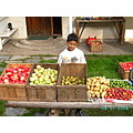 Steven with the day's harvest: (L-R) Rød Ananas, Pippin, Williams Christ (Pears), Potatoes (Dit...