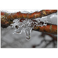 winter nature drop ice branch frost Bulgaria