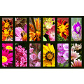 flowers flower flores flor colors colores collage cnthparada