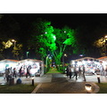nezihmuin turkiye ankara genclik park night tree