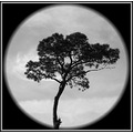 tree night light silhouette blackandwhite