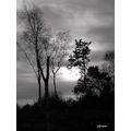 black and white trees sky scene