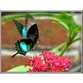Butterfly nature flower