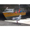 summer holiday scenery boat harbour wales seagull shore bird