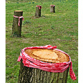 tree stump protest
