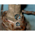 two drops water fall down faucet