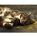 cat pino catnip peaceful high
