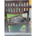 cat garden pet animals