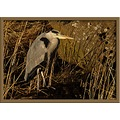 Grey Heron Bird Birds Animals Nature Wildlife Wild Natural