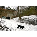snow winter Vysehrad dog path wall Prague Bohemia