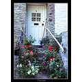 door white cottage flowers