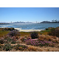 summer wildflowers bridge sanfrancisco port bayareaviewfph oakportfph