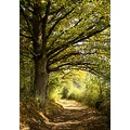 nature path trees France autumn leaves