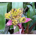 flower buds yellow red green
