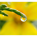 macro flower reflection water drop dew