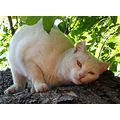 cat white cute tree green pleasure