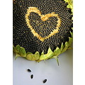 sunflower seeds heart