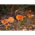 mushroomclub garden wingatui nz littleollie