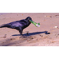 crow chips crisps bag mandurah wa littleollie