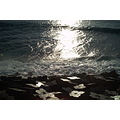 Madeira Portugal 2007 jardimdomar shore coast dusk ocean reflection wave