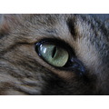 cat eye yellow macro