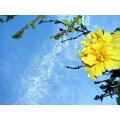 sky blue clouds flower yellow