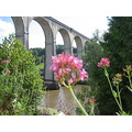 river bridge flower calstock