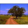landscape road field tree bush mountain matra sky clouds