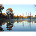 reflectionthursday early morning dead tree lake farm dam perth hills littleollie