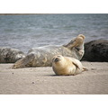lazy seals on the bull island 3