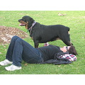 rottweiler dog animal family pet friend