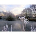another view of the frosty pond