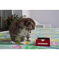 cat animal animals pet cigarettes angry anger compnature