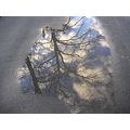 From the archive: Puddle pic