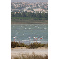 Flamingo lake flying bird Spain salt nature wildlife pink