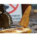 vacation africa stellenbosch butterflys
